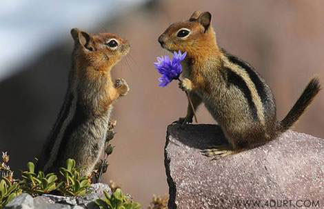 Chipmunks with Flowers